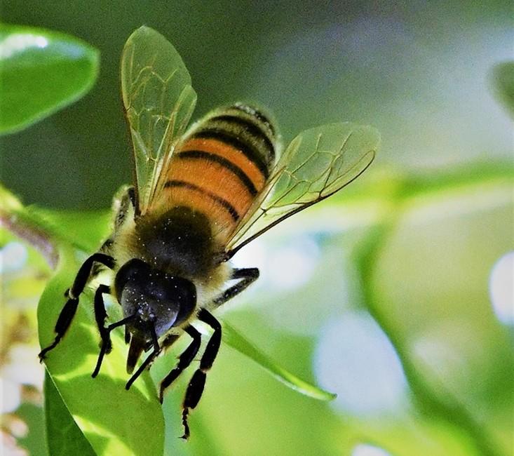 Biene von Rosi