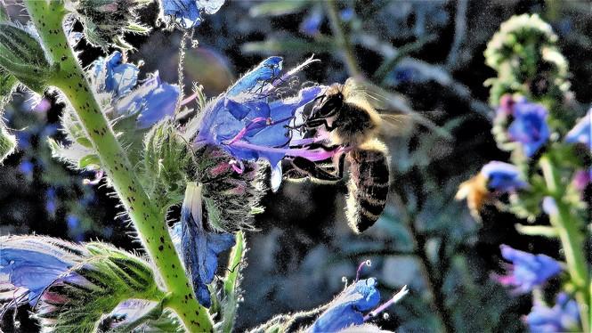 Blaue Blume - Dinkelacker