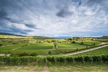 Weingenusstour Staatsweingut